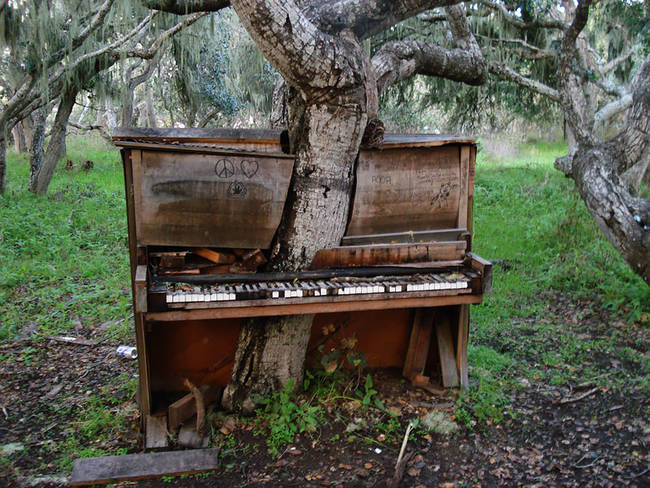 The Old Piano Tree, California