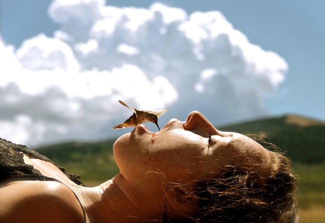 A hummingbird drinking from a human