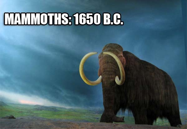 14.) Mammoths were alive when the Giza Pyramids were being built: The Great Pyramid of Giza had existed for about 1,000 years when the last wooly mammoth died in approximately 1650 B.C.