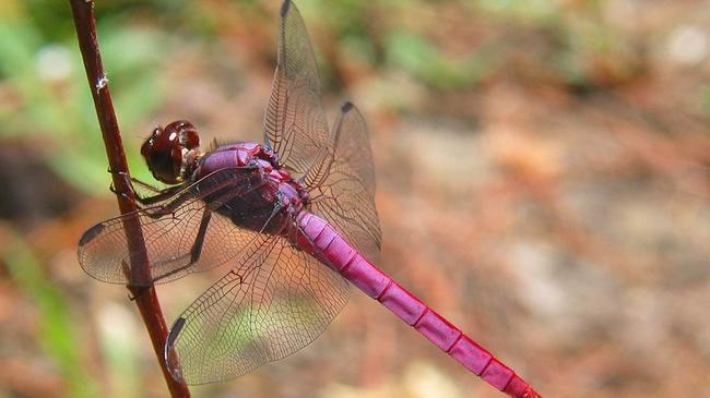 5.) Pink dragon fly, what?!