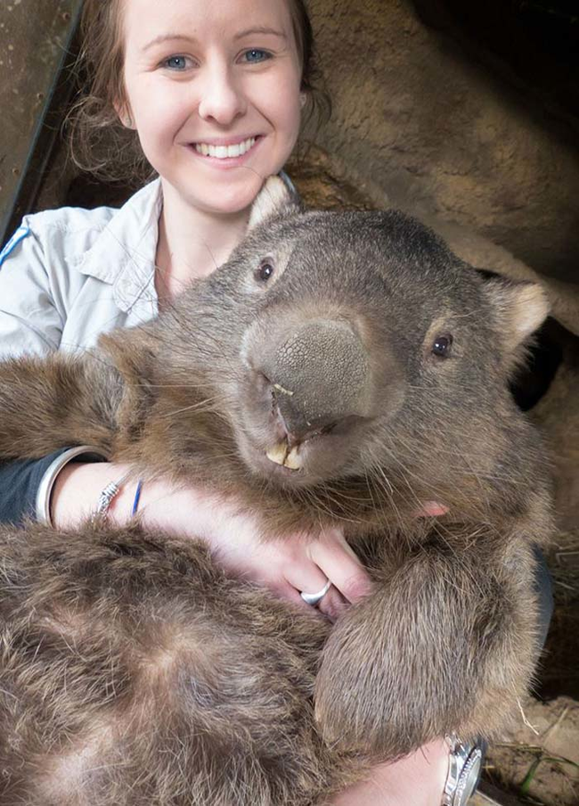 Patrick is 27 years-old (most wombats in captivity only live to be about 20).