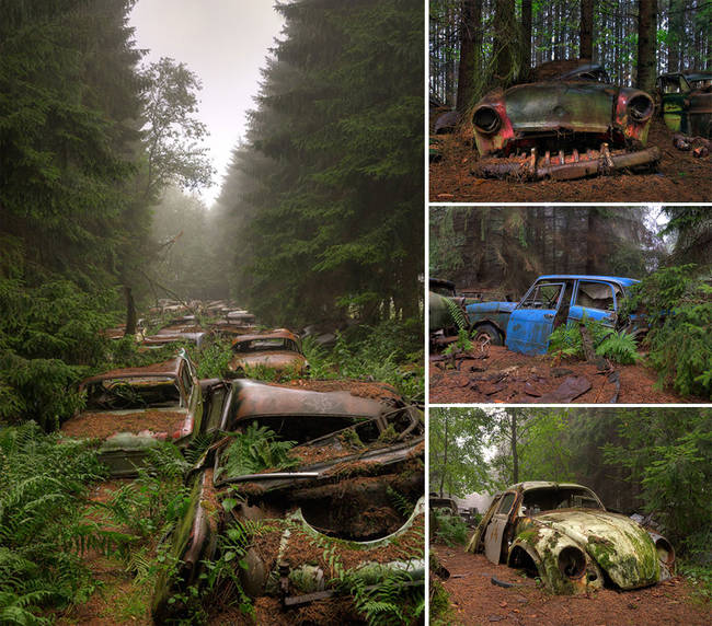 These abandoned cars in Belgium are ancient, and valuable.
