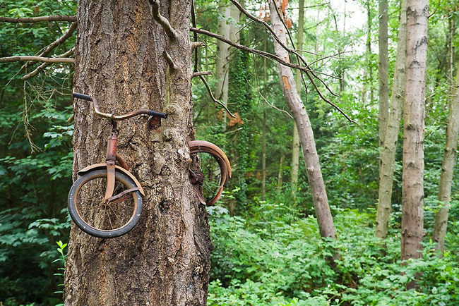 This tree on Vashon Island, Washington just ate a bike. Whoa.