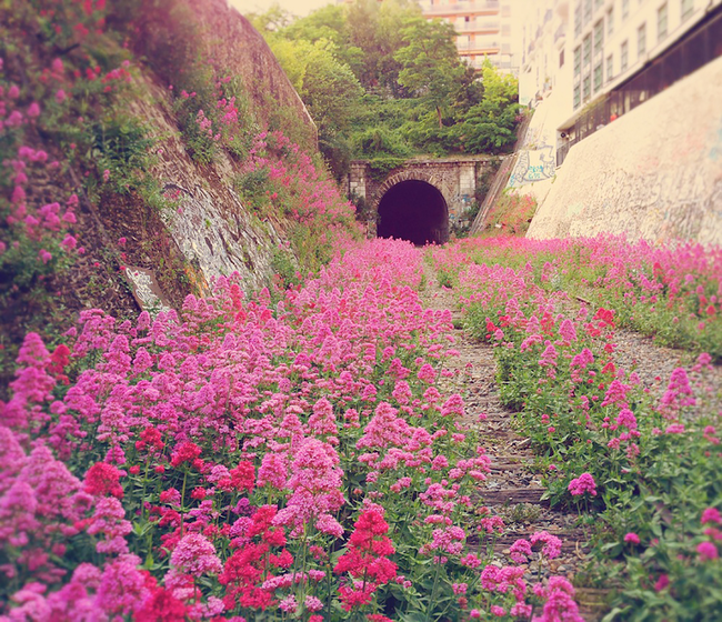 The inner city railway in Paris is abandoned...at least to people.