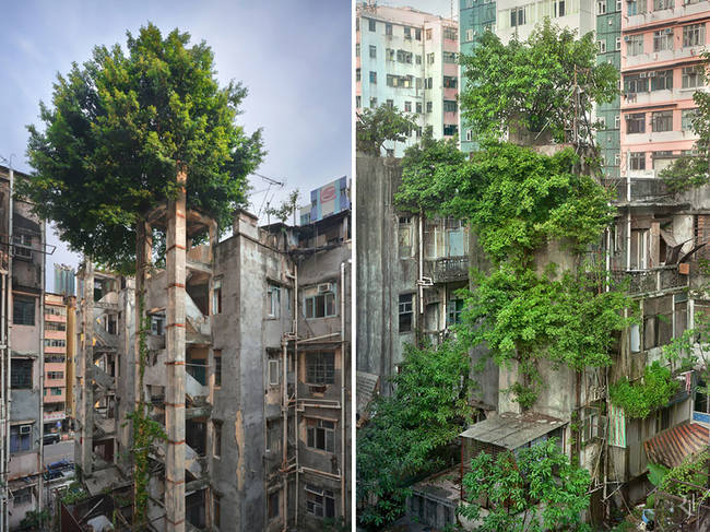 Hong Kong meets indestructible trees.