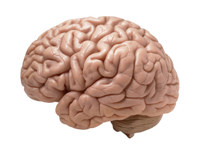 Lack of oxygen in the brain for 5 to 10 minutes results in permanent brain damage.