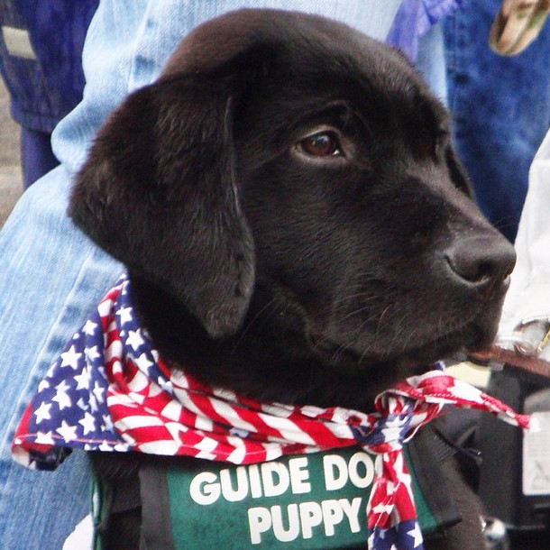 Gotta take a day off from training for the 4th of July, right? Wrong. Every day is a day to learn for an assistance dog in training!