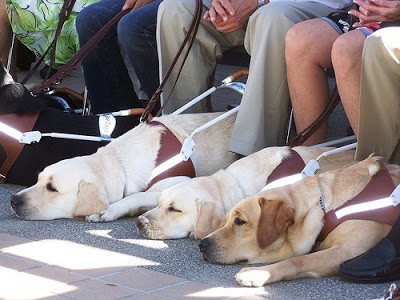 Seasoned veterans catching a quick shut-eye in the shade.