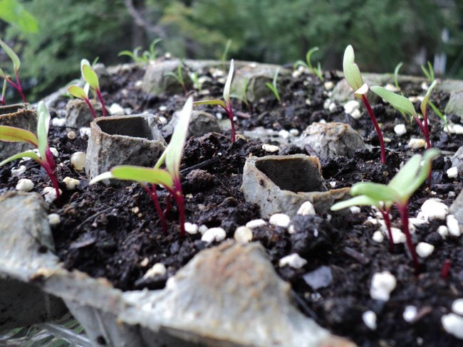 Seedling container