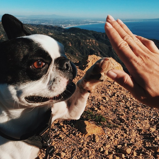"""""""Oh, you think this is a high five? No...please pick me up. I can"""