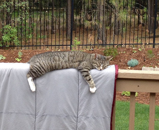 Nap in the air-conditioned home? Nah, he