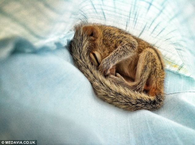 Tired-Squirrels3